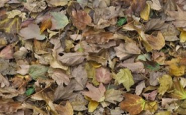 Autumn leaves - green